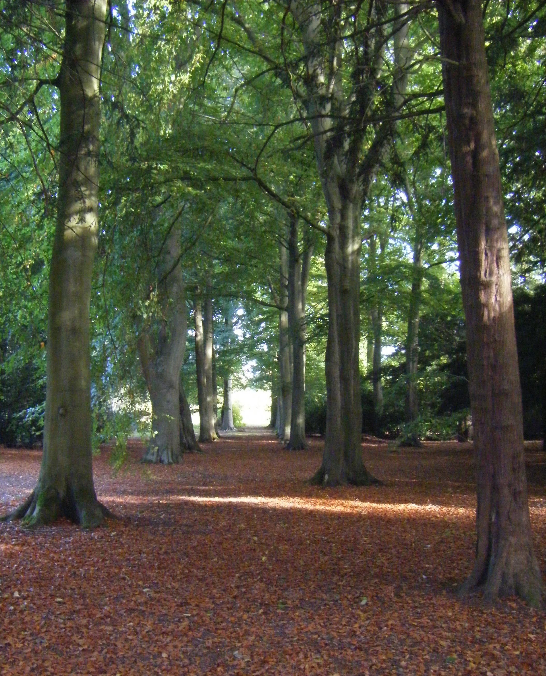 SOCORRO: Norfolk arboretum